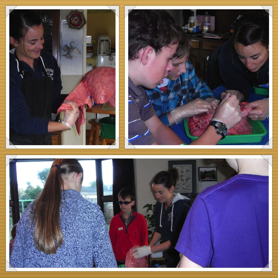 Manawatu Home Educators Dissection Photos