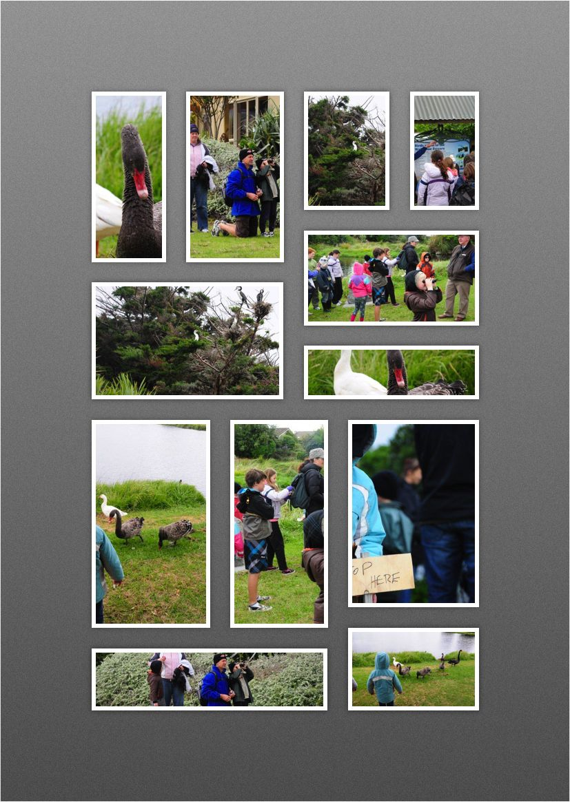 Manawatu Home Educators Waikanae Estuary Photos